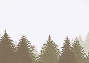 Forest Landscape Thanks Neutral - Back